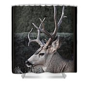 The Buck Shower Curtain
