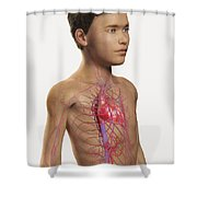 The Cardiovascular System Pre-adolescent Shower Curtain