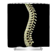 The Cervical Vertebrae Shower Curtain