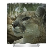 The Cougar 3 Shower Curtain by Ernie Echols