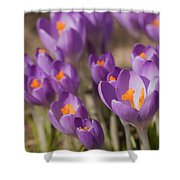 The Crocus Flowers Shower Curtain