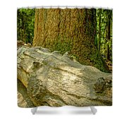 The Fallen Collection 6 Shower Curtain