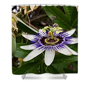 The Flower 13 Shower Curtain