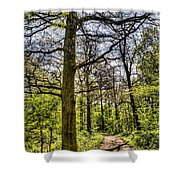 The Forest Path Shower Curtain by David Pyatt