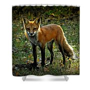 The Fox Shower Curtain