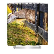 The Grass Is Greener... Shower Curtain