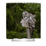The Great Grey Owl Shower Curtain