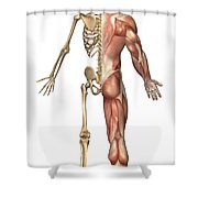 The Human Skeleton And Muscular System Shower Curtain