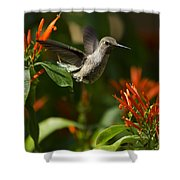 The Hummingbird Hover  Shower Curtain