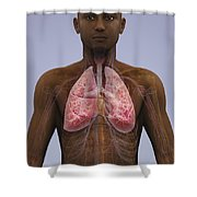 The Lungs And Cardiovascular System Shower Curtain