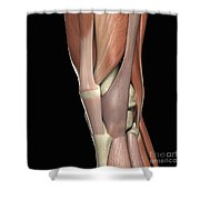 The Muscles Of The Knee Shower Curtain
