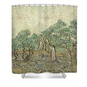 The Olive Orchard Shower Curtain