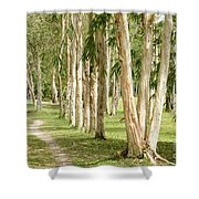 The Path Between The Trees Shower Curtain
