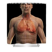 The Respiratory And Cardiovascular Shower Curtain