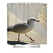 The Walk Shower Curtain