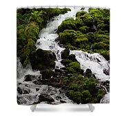 The Water Snake Shower Curtain