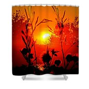Thistles In The Sunset Shower Curtain
