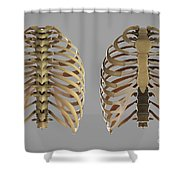 Thoracic Cage Shower Curtain