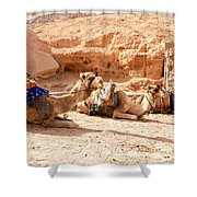 Three Camels Shower Curtain