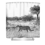 Three Cheetahs At Mashatu Shower Curtain