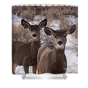 Three Does   #7576 Shower Curtain