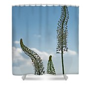 Three Of A Kind Shower Curtain