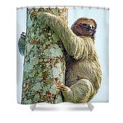 Three-toed Sloth Bradypus Tridactylus Shower Curtain