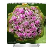 Thrift Named Joystick Lilac Shower Curtain