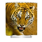 Tiger Stare II Shower Curtain