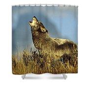 Timber Wolf Howling Idaho Shower Curtain