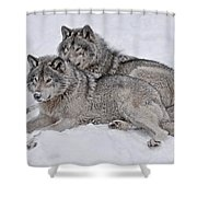 Timber Wolf Pair Shower Curtain
