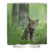 Timber Wolf Pup Shower Curtain