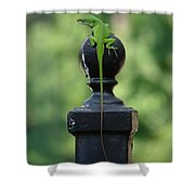 Tip To Tail Shower Curtain