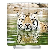 Top Cat Shower Curtain