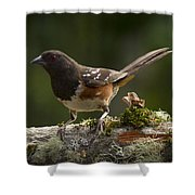 Towhee Shower Curtain