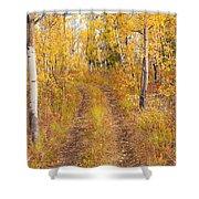 Trail In Golden Aspen Forest Shower Curtain