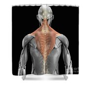 Trapezius Muscle With Skeleton Shower Curtain