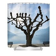Tree And Bench Shower Curtain