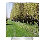 Trees Along A Walkway In A Botanical Shower Curtain