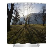 Trees In Backlit Shower Curtain