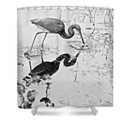 Tri-colored Meal Bw Shower Curtain