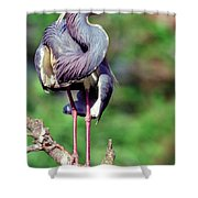 Tricolored Heron In Breeding Plumage Shower Curtain