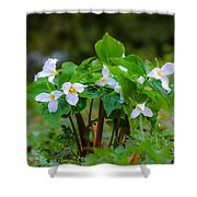 Trillium 16 Shower Curtain