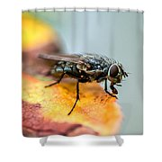 Troublemaker  Shower Curtain