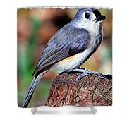 Tufted Titmouse Parus Bicolor Shower Curtain