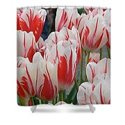 Tulips 8 Shower Curtain