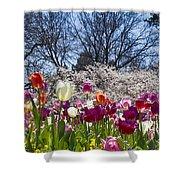 Tulips At Dallas Arboretum V94 Shower Curtain
