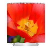 Tulips At Thanksgiving Point - 28 Shower Curtain