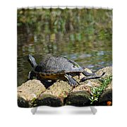 Turtle On A Raft Shower Curtain