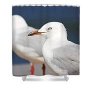 Two Boardwalk Gulls Shower Curtain